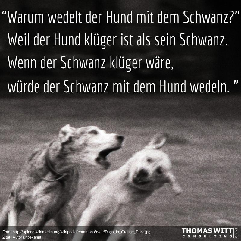 Warum_wedelt_der_Hund_mit_dem_Schwanz