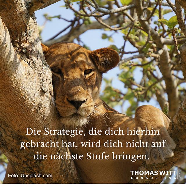 DieStrategiediedichhierhingebracht